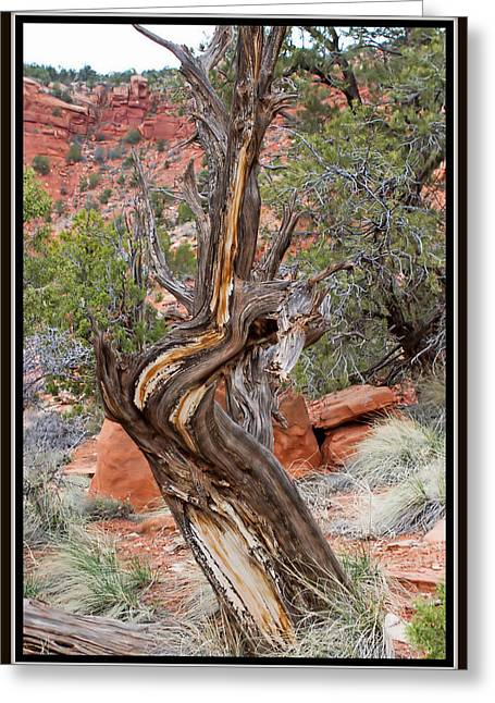 Decorative Dead Tree Greeting Card