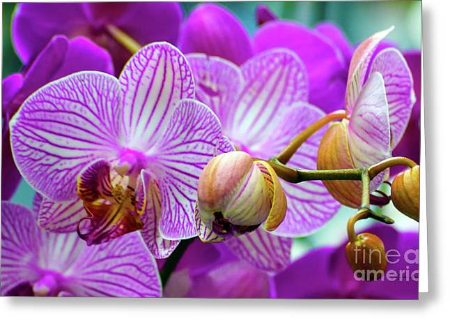 Greeting Card featuring the photograph Decorative Fuschia Orchid Still Life by Mas Art Studio