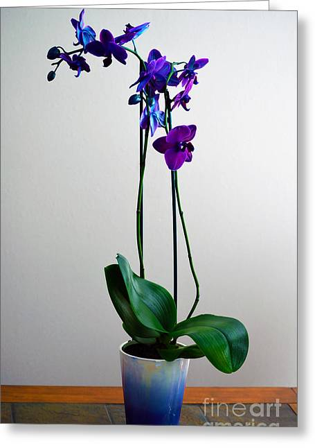 Greeting Card featuring the photograph Decorative Orchid Photo A6517 by Mas Art Studio