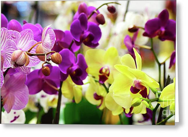 Greeting Card featuring the photograph Decorative Orchids Still Life B82418 by Mas Art Studio