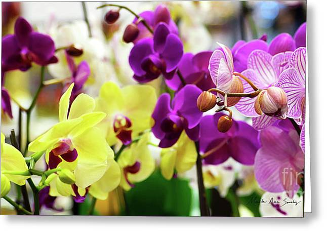 Greeting Card featuring the photograph Decorative Orchids Still Life C82418 by Mas Art Studio