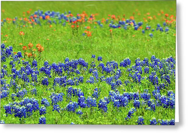 Decorative Texas Bluebonnet Meadow Photo A32517 Greeting Card by Mas Art Studio