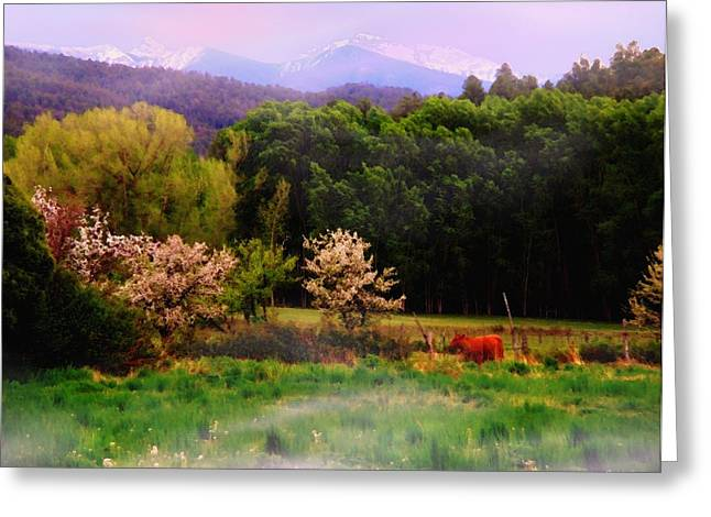 Greeting Card featuring the photograph Deep Breath Of Spring El Valle New Mexico by Anastasia Savage Ealy