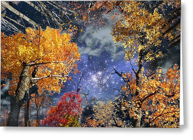Deep Canopy Greeting Card by Dave Martsolf