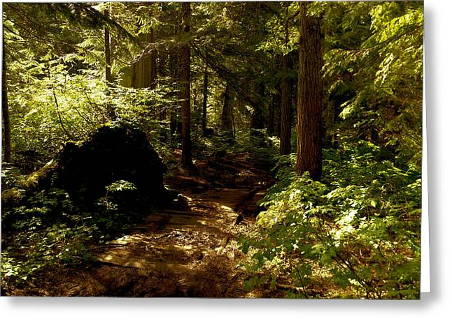 Deep Down The Trail Greeting Card by Jeff Swan