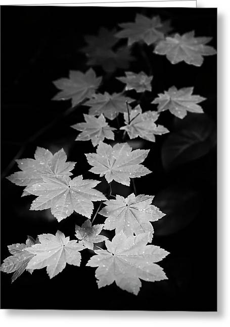Deep Forest Maple Greeting Card