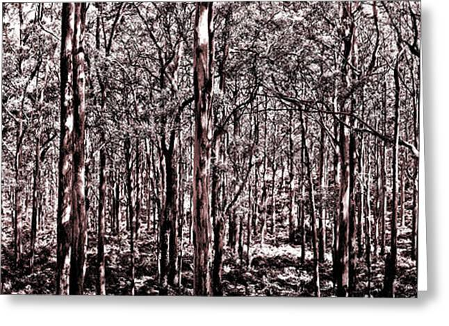 Deep Forest Sepia Greeting Card by Az Jackson