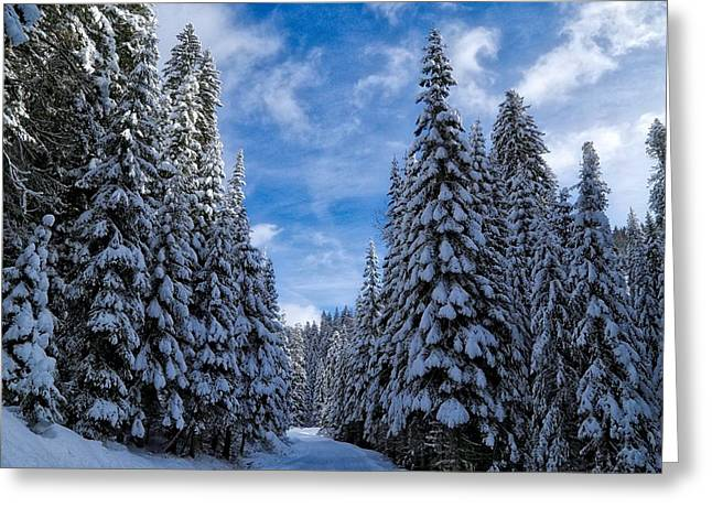 Deep In The Snowy Forest Greeting Card by Lynn Hopwood