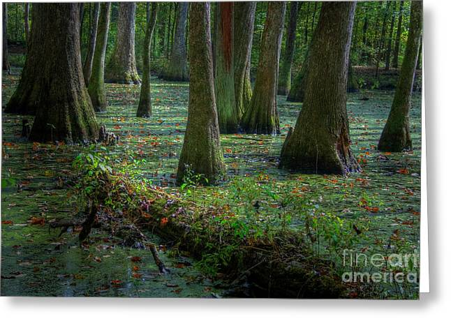 Deep In The Swamp Greeting Card
