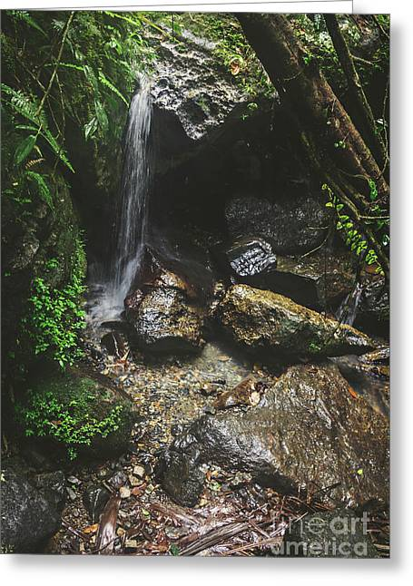 Deep Into The Rainforest Greeting Card by Joan McCool