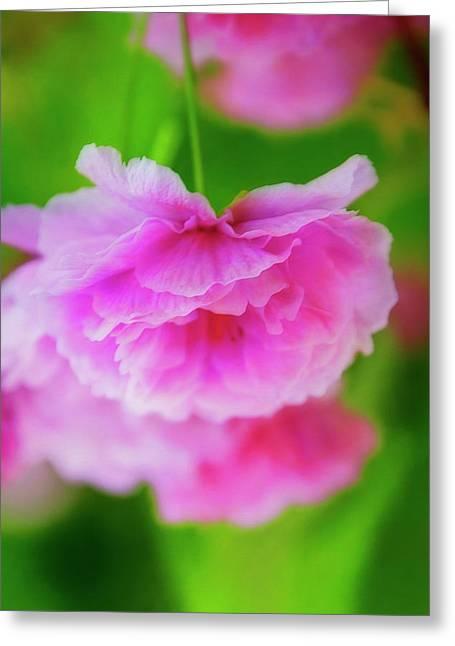 Deep Pink Blossoms Greeting Card