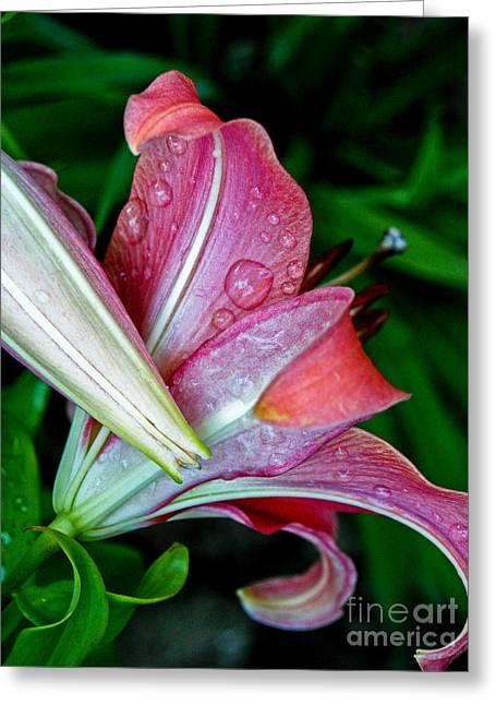 Deep Pink Lily Greeting Card by Emilio Lovisa