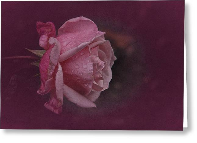 Deep Pink Nov Rose Greeting Card