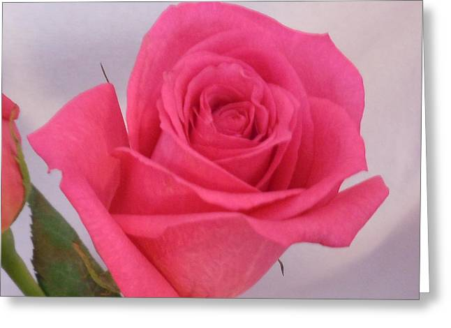 Deep Pink Rose Greeting Card