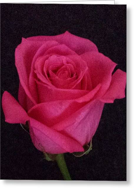 Deep Pink Rose On Black Greeting Card
