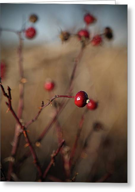 Deep Red Rose Hips On Brown And Blue Greeting Card