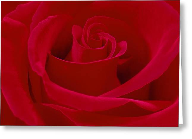 Deep Red Rose Greeting Card by Mike McGlothlen