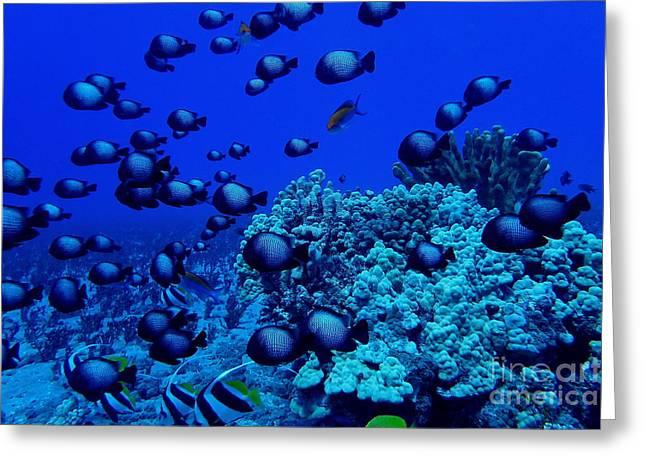 Deep Reef Oasis Greeting Card by Jackson Kowalski