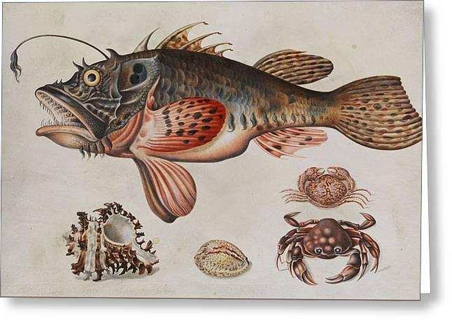 Deep-sea Fish, Crabs And Sea Snails Greeting Card