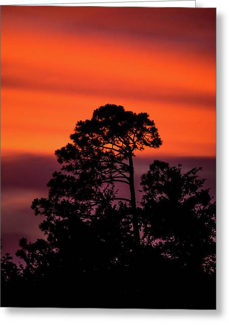 Deep Silhouettes Greeting Card by Shelby Young