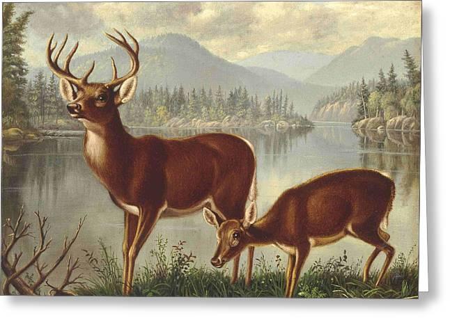 Deer And Doe Greeting Card by MotionAge Designs