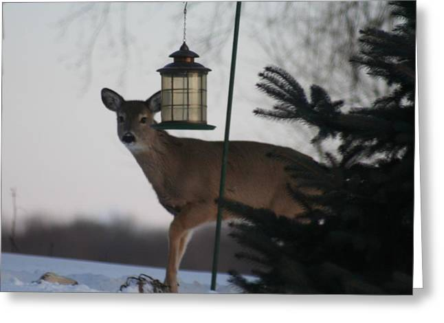 Deer At A Bird Feeder Greeting Card by Magi Yarbrough