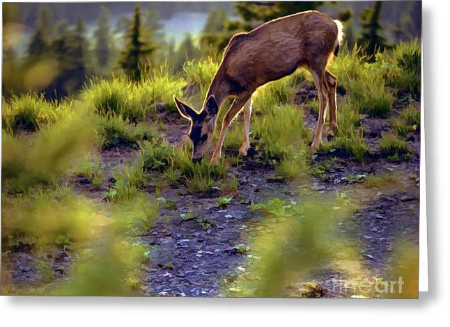Deer At Crater Lake, Oregon Greeting Card