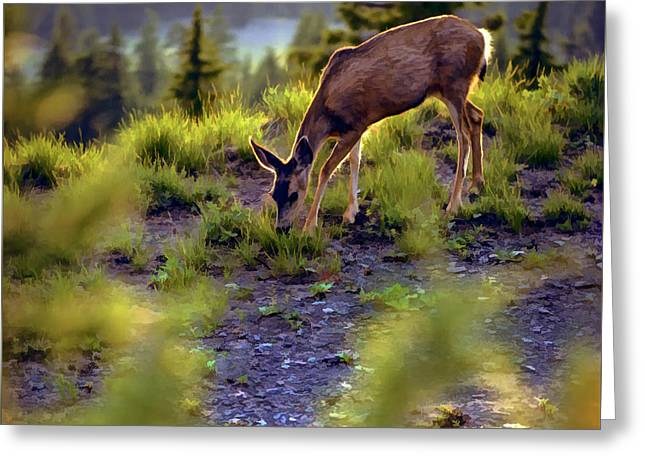 Deer At Crater Lake, Oregon Greeting Card