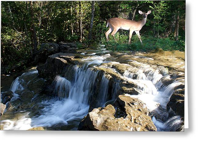 Greeting Card featuring the photograph Deer At The Falls by Rick Friedle