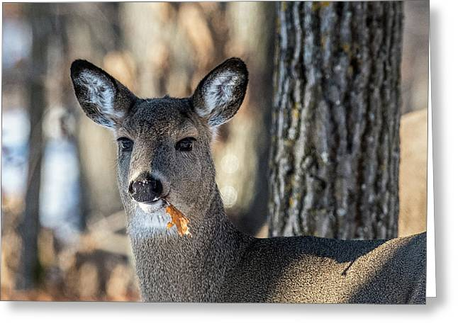 Greeting Card featuring the photograph Deer At The Salad Bar by Paul Freidlund