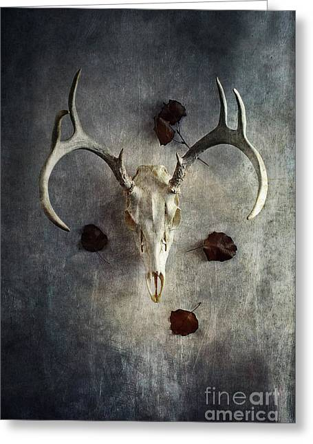 Greeting Card featuring the photograph Deer Buck Skull With Fallen Leaves by Stephanie Frey
