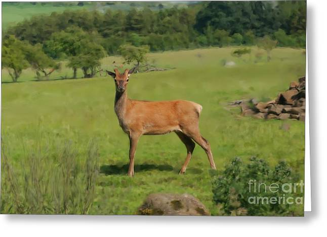 Deer Calf. Greeting Card