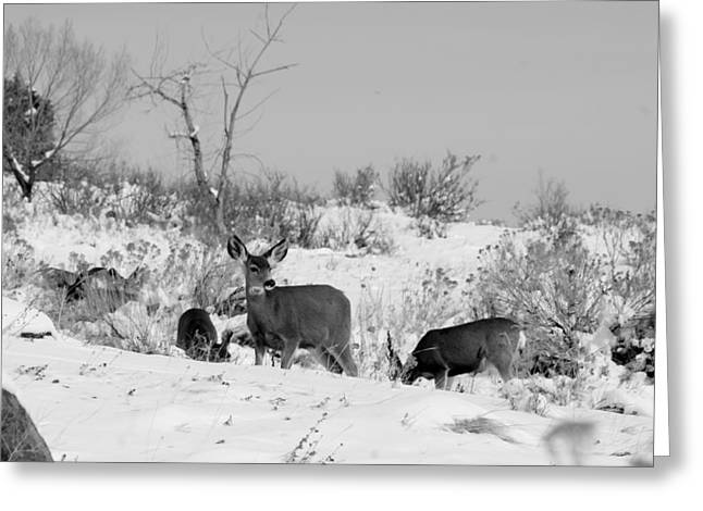 Best Sellers -  - Grazing Snow Greeting Cards - Deer Grazing in Snow Greeting Card by Rhonda DePalma