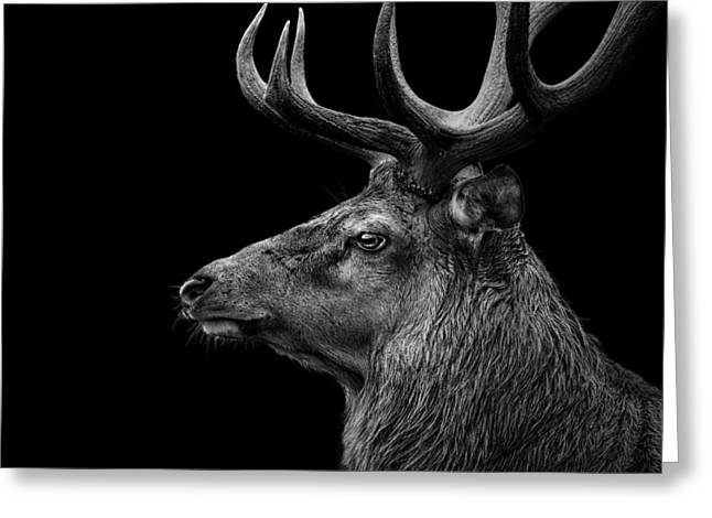 Deer In Black And White Greeting Card by Lukas Holas