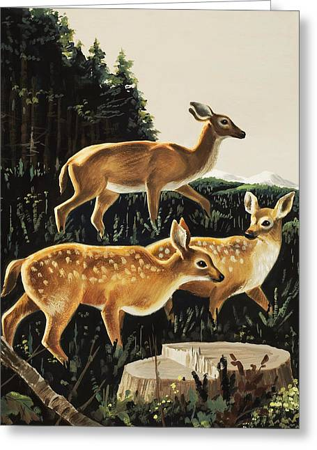 Deer In Forest Clearing Greeting Card by English School