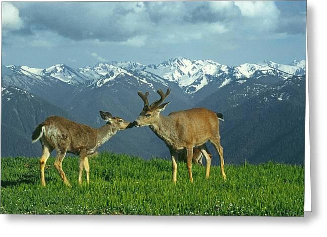 Ma-181-deer In Love  Greeting Card