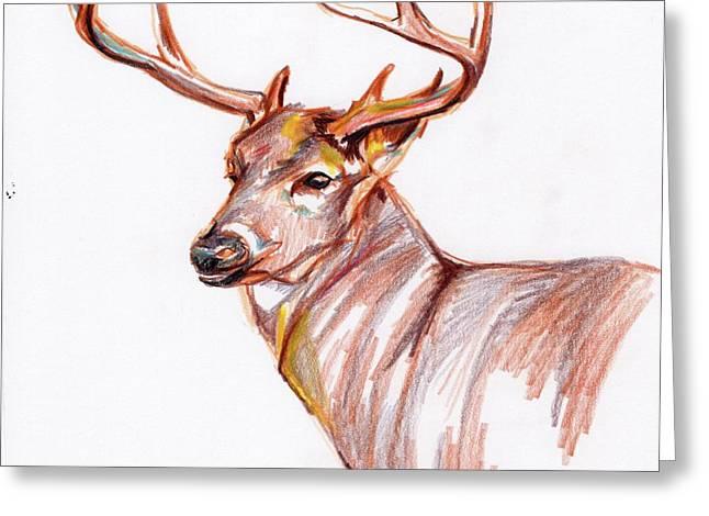 Deer In Pencil Greeting Card