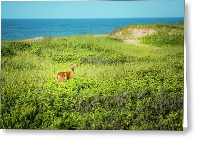 Deer In The Dunes Greeting Card