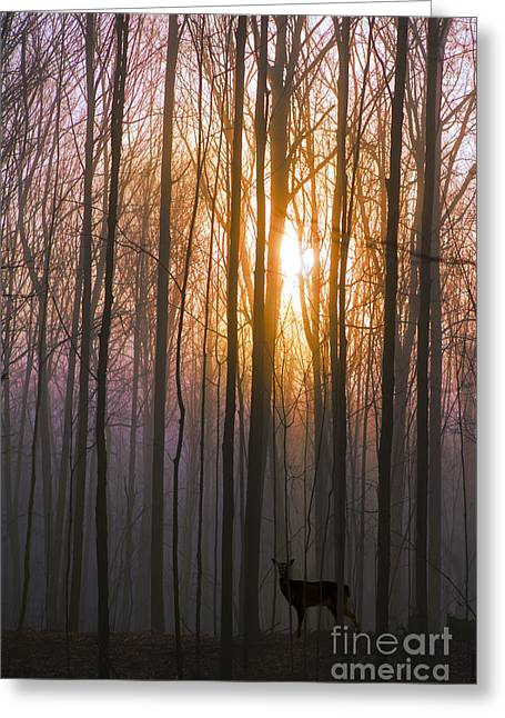 Deer In The Forest At Sunrise Greeting Card