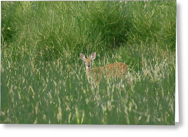 Deer In The Grass Greeting Card by Ernie Echols