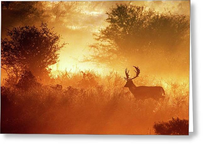 Deer In The Mist Greeting Card by Roeselien Raimond