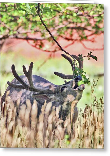 Deer In The Orchard Greeting Card