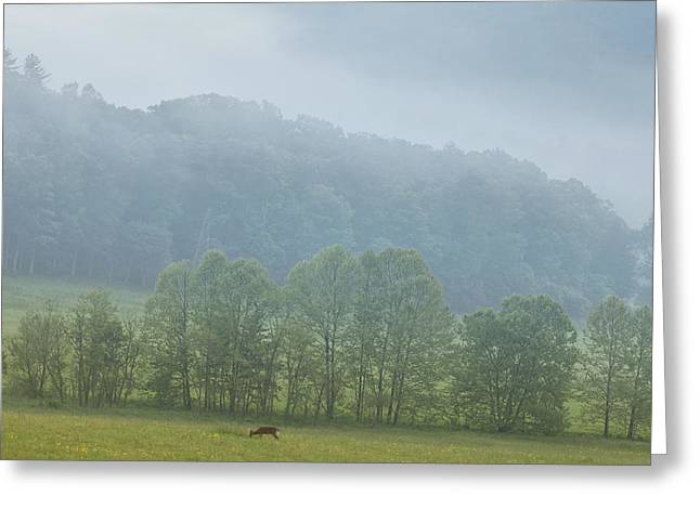 Deer In The Smokies Greeting Card by Andrew Soundarajan