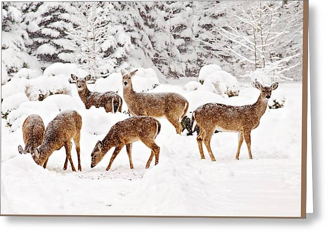 Greeting Card featuring the photograph Deer In The Snow 2 by Angel Cher