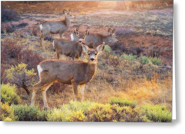 Deer In The Sunlight Greeting Card by Darren White