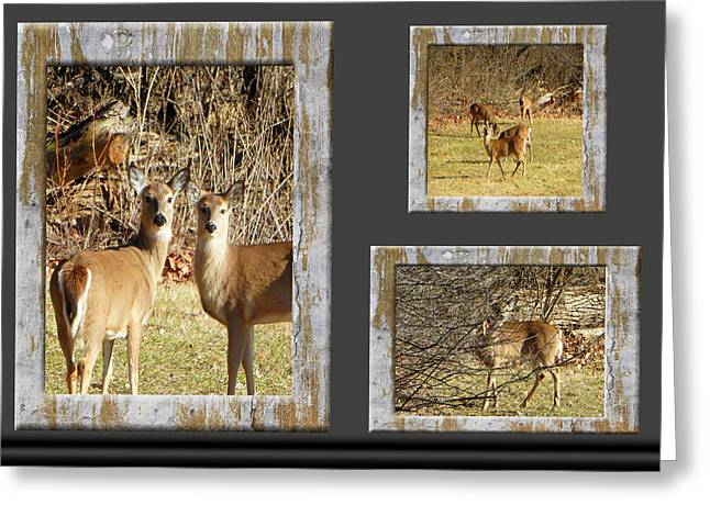 Deer Lovers Greeting Card by Tina M Wenger