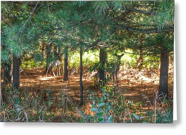 1011 - Deer Of Croswell I Greeting Card