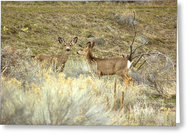 Deer Greeting Card by Scott Gould