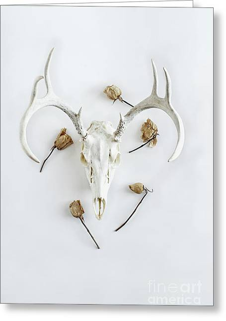 Greeting Card featuring the photograph Deer Skull With Antlers And Roses by Stephanie Frey