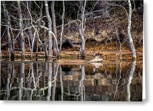Greeting Card featuring the photograph Deer Swim by Alan Raasch